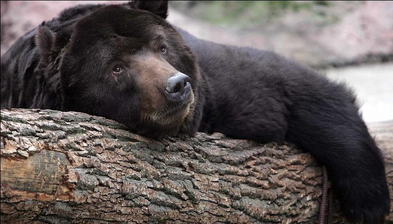 Comment les animaux hibernent-ils ?