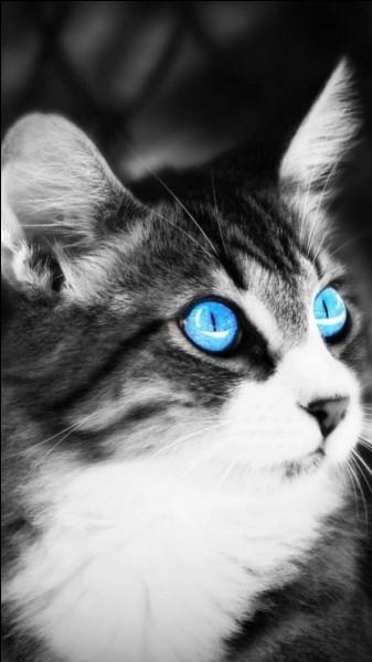 Lorsqu'il y a de la lumière, comment sont les pupilles du chat ?