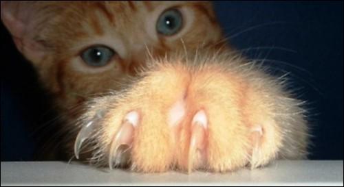 Si votre chat vous griffe vous mais pas vos amis, cela indique que votre chat :