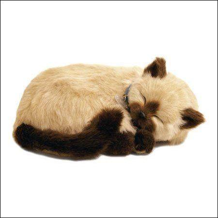 Quelle race de chat est le plus souvent représentée en peluche ?