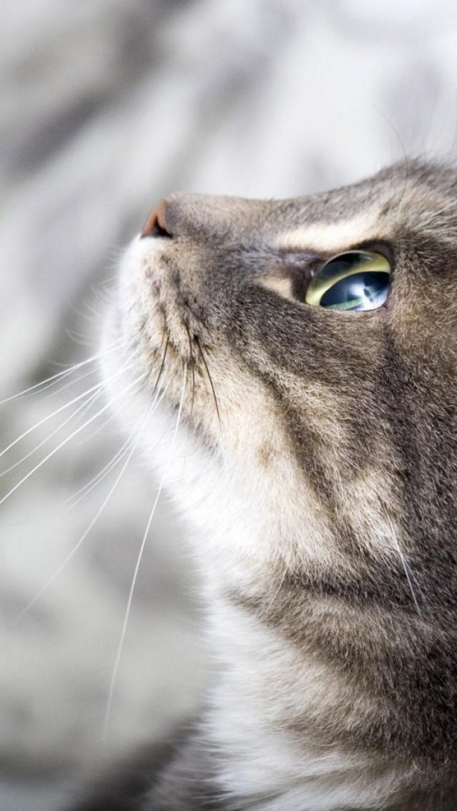 Le chat, test de connaissances