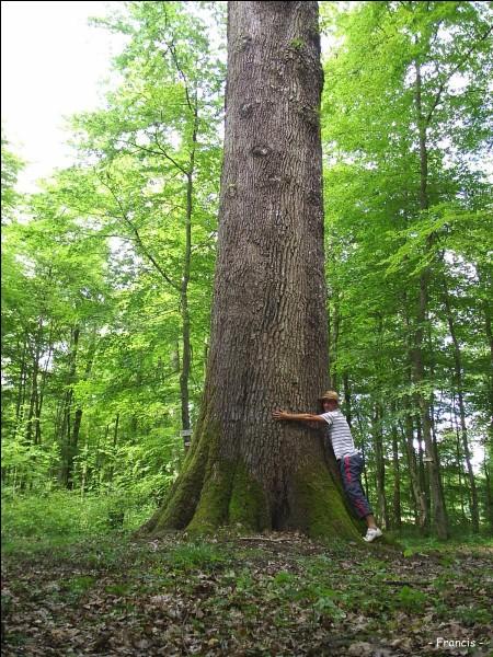 Le fruit du chêne est le gland. Vrai ou faux ?