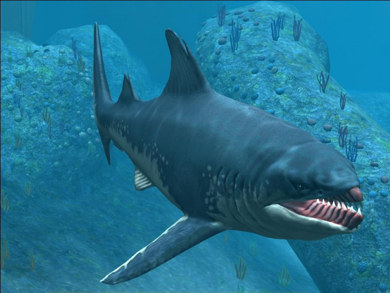Comment s'appelle cette créature marine ?