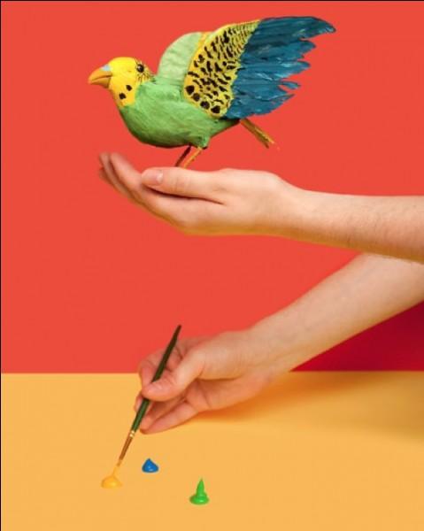 Aux Etats-Unis, dans le Michigan, il est illégal de peindre des moineaux pour les vendre en tant que perruches !