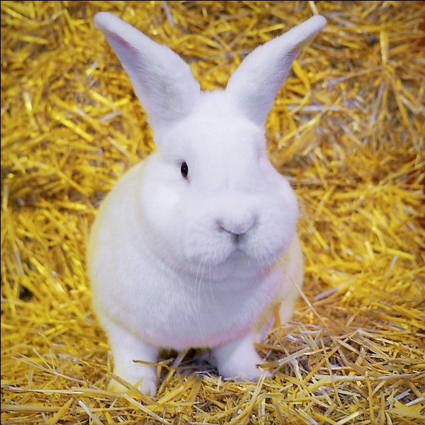 Je vous pose un lapin, quel est ce prénom ?