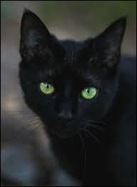 À quel autre chat de son Clan ressemble-t-elle énormément ?