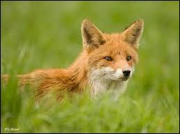 Complétez cet autre proverbe français : Ainsi dit le renard des ..., quand il n'y peut atteindre : Elles sont trop vertes.