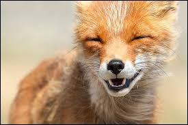 De quel autre animal s'agit-il ici, dans ce proverbe français ?À la peau du ..., couds celle du renard.