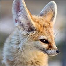 Et que manque-t-il pour que cette citation de Cervantès soit complète ?Le renard en sait long, mais plus long celui qui...