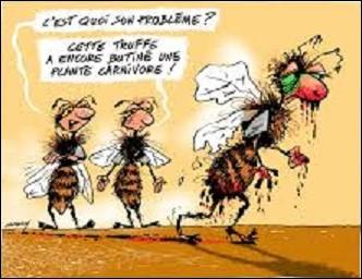 Langue étrangère : en langue anglaise, comment appelle-t-on une abeille ?
