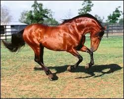Premièrement, niveau facile : De quelle couleur est ce joli cheval ?