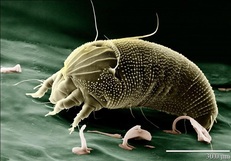 Quels sont les plus petits parmi les arthropodes ?