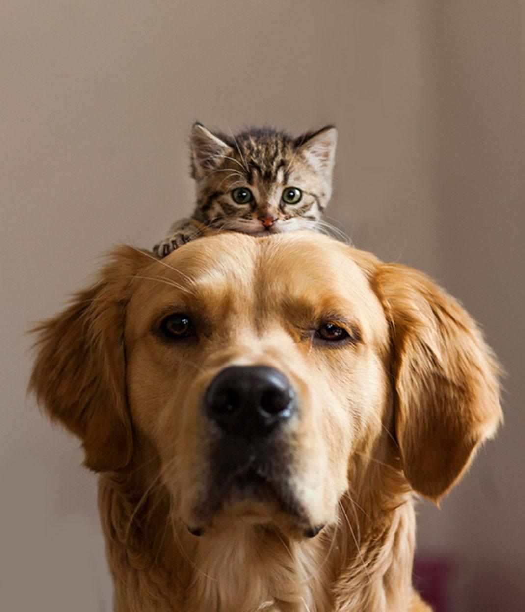 Les animaux les plus petits