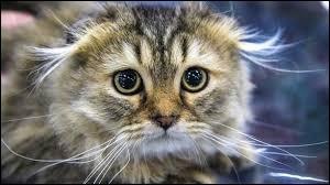 Complétez cette citation de Susan Easterly : Les gens qui aiment les chats sont ceux qui...