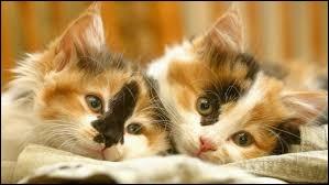 Et complétez maintenant cette citation de Victor Hugo : Dieu a inventé le chat pour que l'homme ait ... à caresser chez lui.