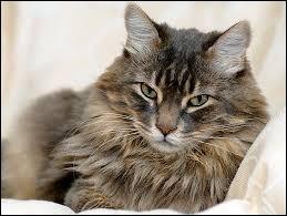 Enfin, complétez cette citation de Colette : ... avec un chat n'est jamais perdu.
