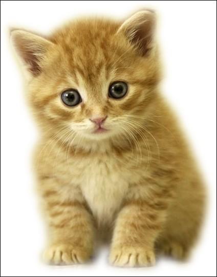 Complétez la citation de Annie Duperey : Ce qui est merveilleux avec un chat c'est qu'il n'y a rien à faire quand il vient à vous, qu'à...