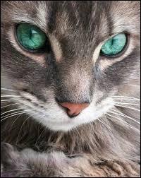 Complétez à présent cette citation de Tomi Ungerer : Les chats sont malins et conscients de...