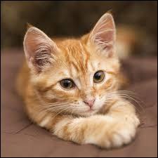 Et en voici une de Ernest Hemingway : Le chat est d'une honnêteté absolue : les êtres humains cachent, pour une raison ou une autre, leurs ... Les chats, non.