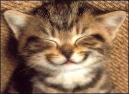 Au tour d'une autre citation, de Annie Duperey : Le silence des chats est...