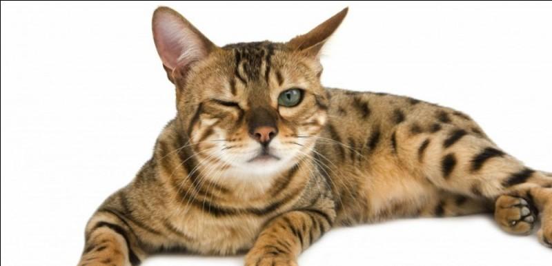 Complétez celle-là de Jean Cocteau : Petit à petit les chats deviennent l'âme de ...