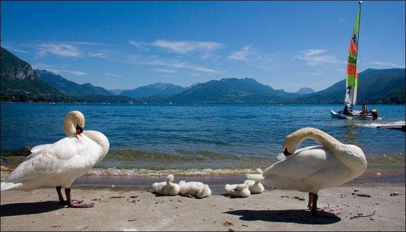 Tu es loin de la mer mais l'eau te manque. Dans quel milieu naturel peux-tu te baigner à la montagne ?