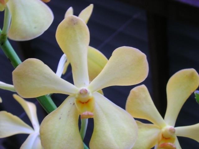 15 mots commençant par O comme Orchidée