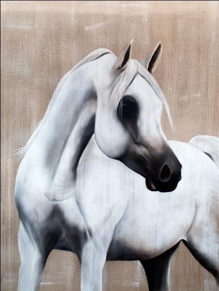 Quelle est cette race de cheval ?