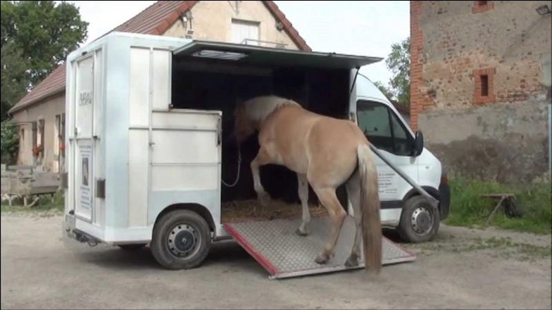 Pour rentrer ton cheval dans le camion, tu montes...