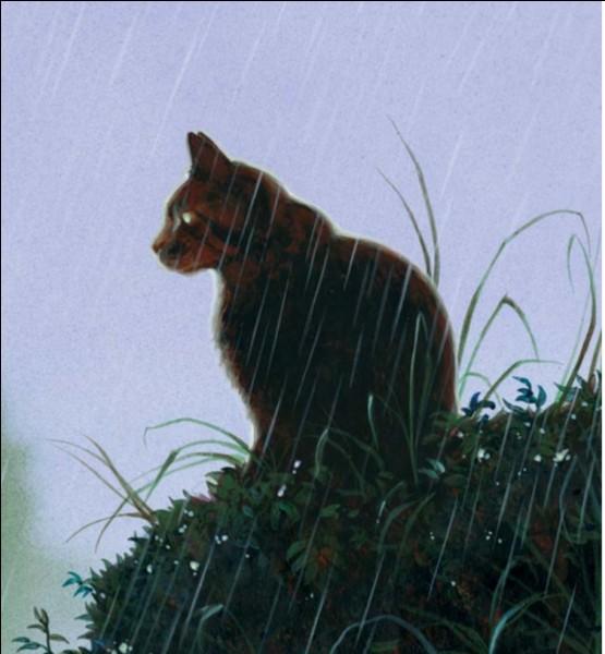 Quel est le premier chat sauvage qu'il rencontre ?