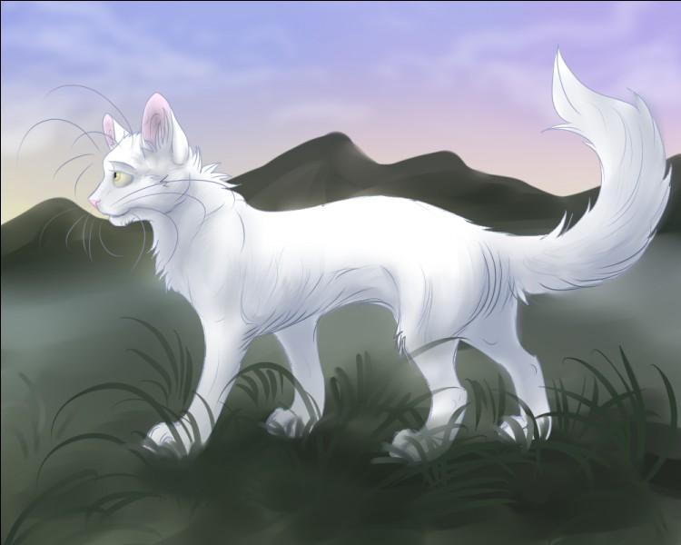 Comment s'appelle la chatte qui a été tuée par Etoile du Tigre pour attirer les chiens ?