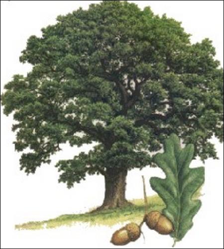 Indice : '... rendait la justice sous un chêne, Arpaillange la rend comme un gland.' (André Santini)