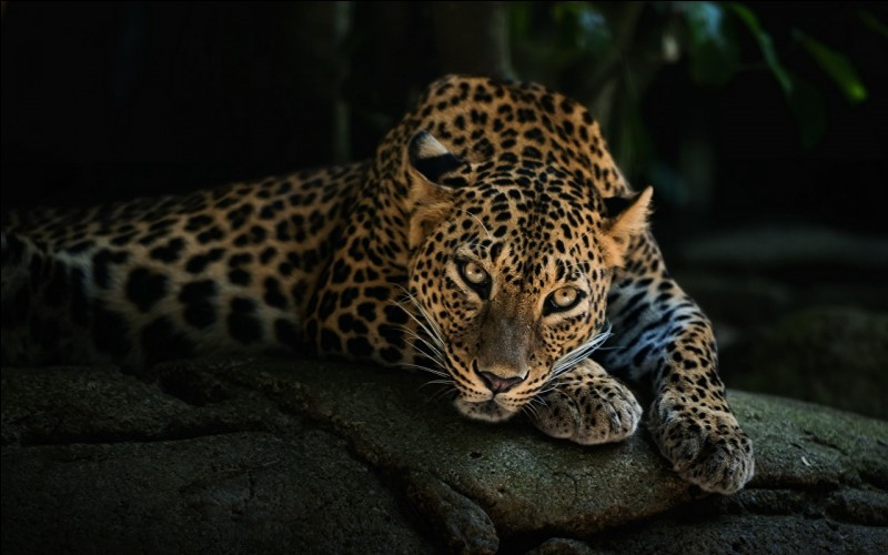 Qui porte un haut à manches longues motifs léopards ?