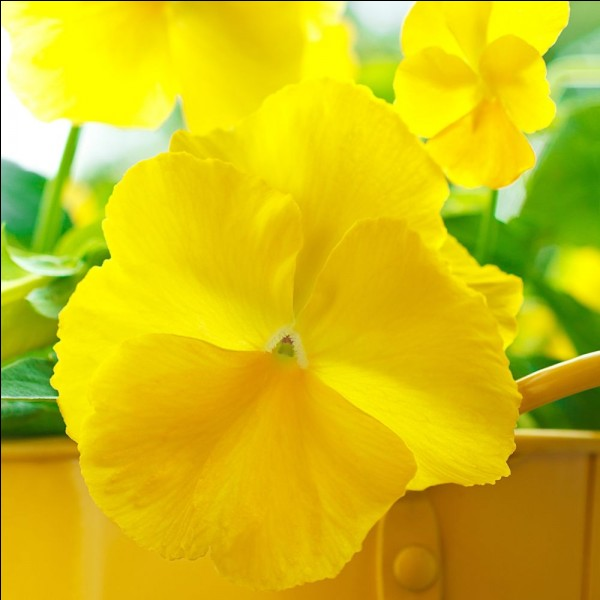 Comment dit-on ''jaune'' en anglais ?