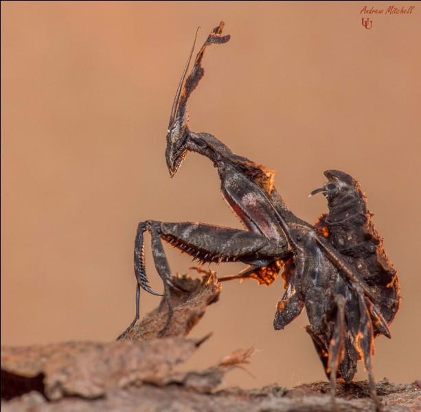 A quel film vous fait penser cet insecte ?
