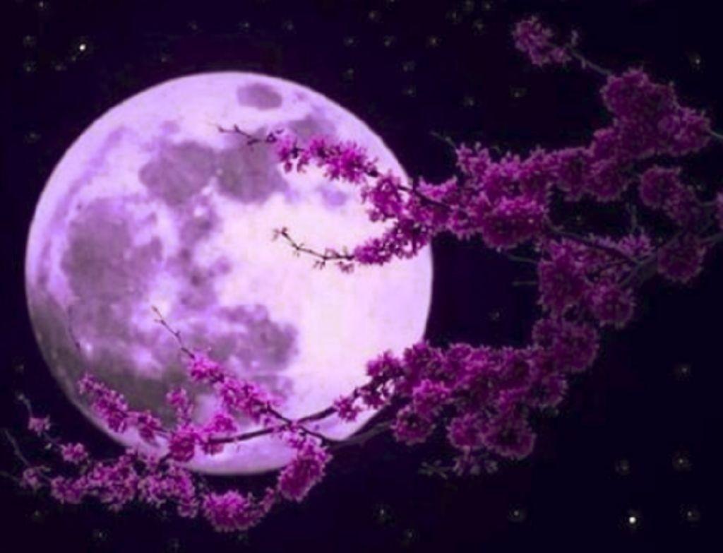 Quel personnage de ''La Gardienne des cristaux de Lune'' es-tu ?