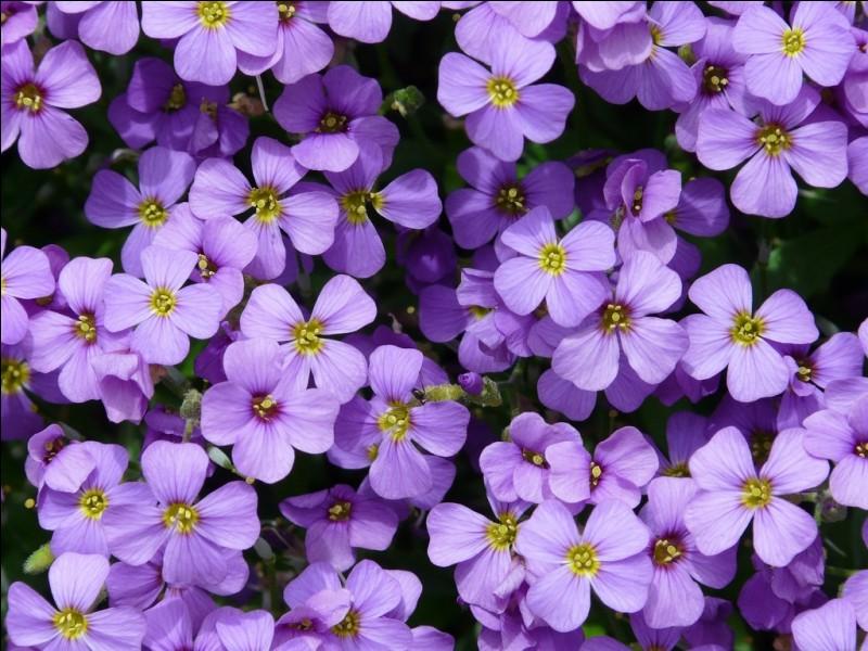 À quel nom correspond la couleur violette ?