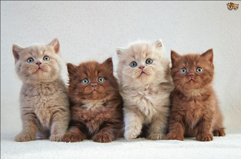 Qui sont les chatons de Feuille de Nénuphar et Orage Poussiéreux ?