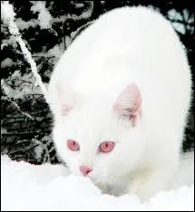Par quel chat Papillon de Nuit a-t-il été possédé ?