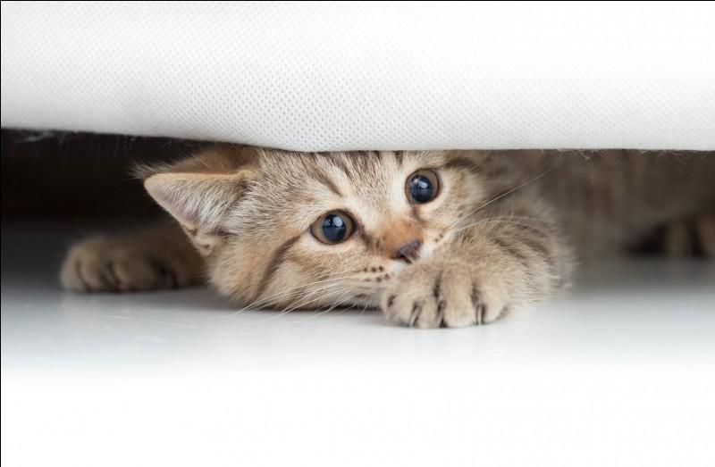 Tu te caches...