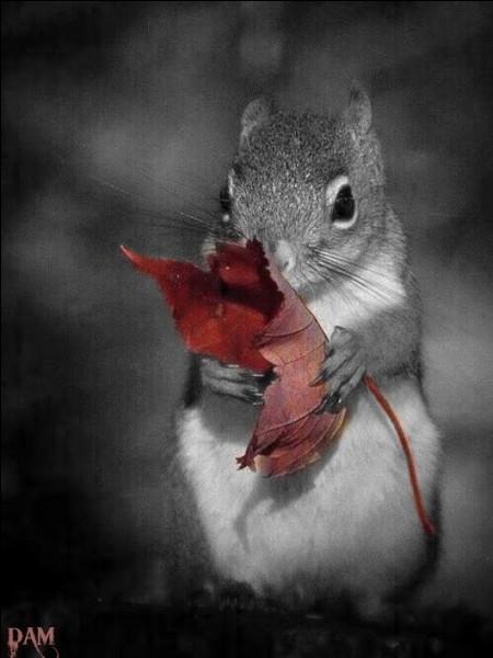 Les petits-gris se fondent dans le paysage d'automne ! Qu'est-ce qu'un petit-gris ?