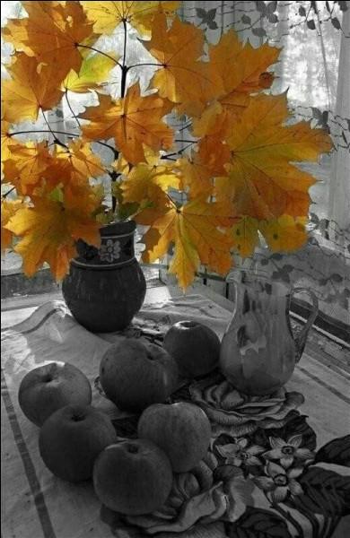 En France, comment se nomme cette période de temps ensoleillé et doux qui se prolonge en novembre parfois jusqu'en début d'hiver ?