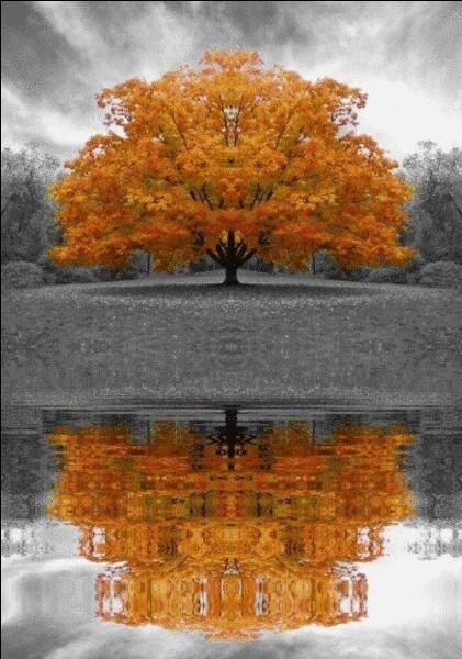 """Complétez les paroles de la """"chanson d'automne"""" écrite par Paul Verlaine : """"Les sanglots longs des violons de l'automne...... d'une langueur monotone"""" :"""