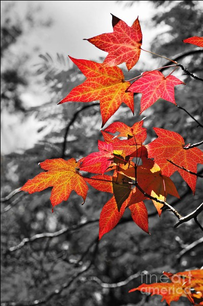 """Où se passe l'automne dans le titre d'un roman de Boris Vian"""" ?"""