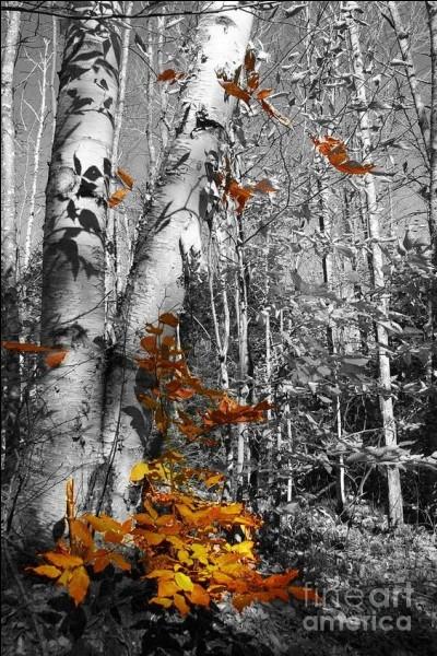 """Qui chantait """"A chaque fois les feuilles mortes te rappellent à mon souvenir"""" ?"""