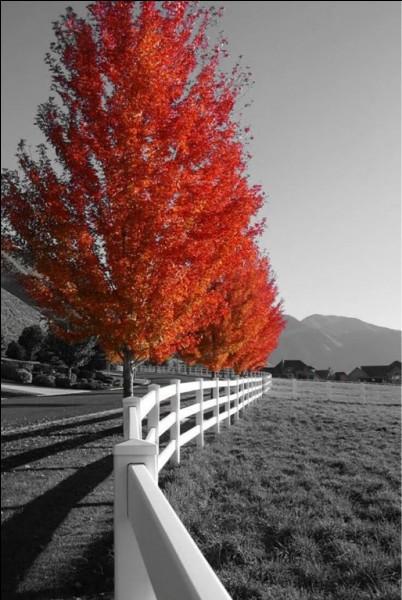 Quel mois d'automne est chanté par Francis Cabrel ?