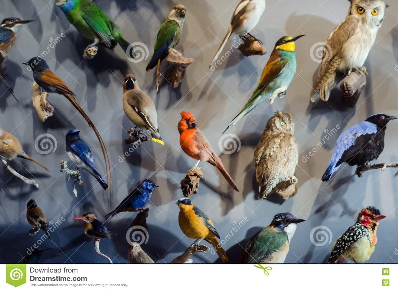Quel oiseau es-tu ?