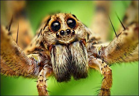 Comment par l'araignée. Cette phobie que la plupart des personnes l'ont s'appelle…