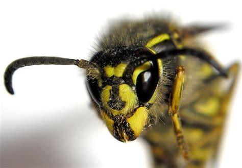 Ces insectes que l'on déteste tous !