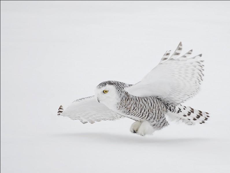 Quel est cet oiseau, l'un des emblèmes du Québec ?